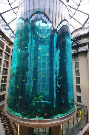 aquarium hotel radisson blu